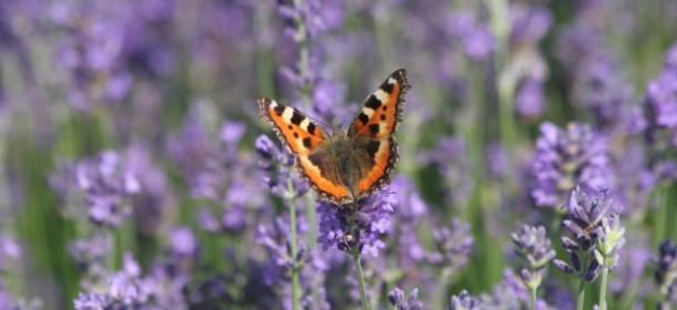 Piękno przyrody - cisza i spokój feature image